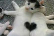 I ♥ hearts / Hearts everywhere