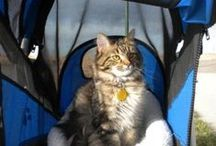 Cat Harness and Stroller Page