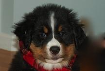 puppy love / by jayne evangelista