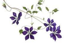 Botanical Art | Plants & Flowers / by Amagoia Santin