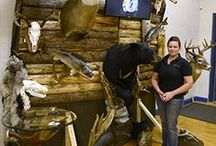 Black & Tan Taxidermy / Black & Tan Taxidermy, Thunder Bay, Ontario Taxidermy and Tanning in Northwestern Ontario. Including wall mounts, rugs,  fish, and euro mounts.    Located in Thunder Bay, Ontario.
