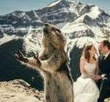 Funny Wedding Photos / funny wedding photos, goofy wedding photos