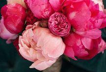 Flowers / by Nina Goode