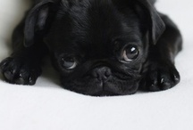 Pugs make me really happy. / by Megan Bryner