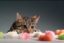 Cat / We Love Cat♡ / by Koji Moriai