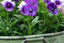 Garden & Patio / by Vicki V