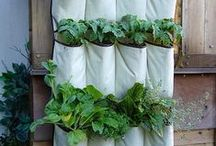 Herbs, Gardening, and Green house / by Cathy Cook