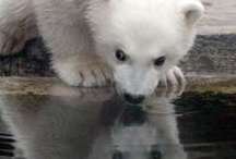 Polar bear <3 / by Vicki V