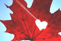 Canada / My Home and Native Land / by Vicki V