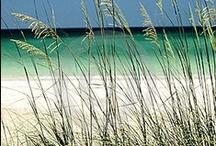 Loving Florida ❤
