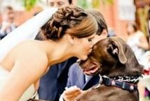 Pets in the Wedding / Man's best friend is never far from the party. Find your puppy love with these photos from JunebugWeddings.com - a trusted wedding planning resource and online magazine with serious personal style!  / by Junebug Weddings