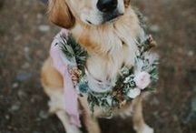 Pets in the Wedding / wedding dog, dogs in the wedding, dog floral collar, wedding dog ideas, wedding dog pictures
