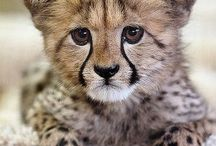 African Animals / Various wild animals who live in Africa