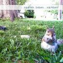 Squ'abies! Cam / Squirrels .. babies ....... Squ'abies! .. Live Squirrel and Bird feeder cam on Teed.tv