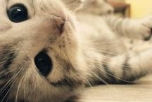 Animals / Amor na sua forma mais pura!