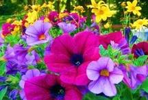 In the Garden / by Jill Daugherty