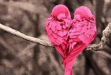 SEASONAL - Valentine's Day Lovelies