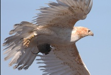 Feathered Fauna