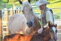 Horses - Keeping it Natural / Natural horsemanship, barefoot horses, 24/7 turnout.  We're doing as much as we can to keep it natural.