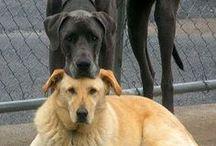 Dang Dogs / hair,puke,pee,noise,rips,tears,poop,more poop,slobber,farts, / by Pat Stevens