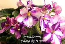 African Violets - Mine / Photos of African Violets I've grown in the past. / by Kim Koberstein