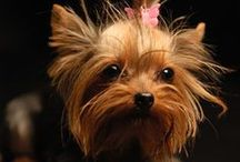 Animal Pictures.....Dogs / Dogs / by Terri Smith