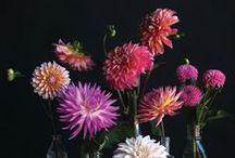 Flowers & Flower Arrangements