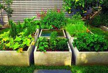Garden / by Kathy Holen