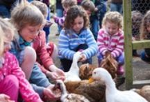 Meet our friendly farm animals / The friendly farm animals here at Bosinver are very keen to meet all of our guests!