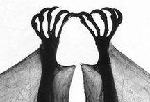 Animal Kingdom / by Shelley Musleh