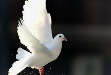 Peace Love Harmony / by Anita Appelhans