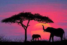 Elephants / by Hailey Nigro
