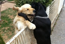 Puppy Love ;-) / by Coleen Fitt