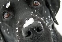 Cute! / I love dogs more than anything else on this earth / by Sam Caster