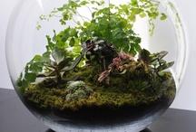 Terrarium / by Eeva-Leena Muurman