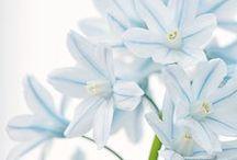 ❁  Flowers & Plants ❁  / by Wild Peony