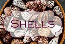 Shells & the seaside / Shells, boats, seaside.