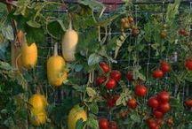 Gardening / Gardening tips and ideas.