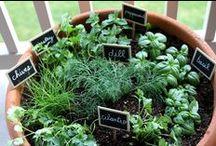 In My Garden - Herbs