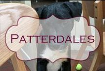 Patterdales and doggy stuff