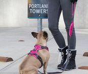 DOG Harnesses / Our range of DOG harnesses!