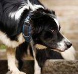 DOG Collars / Our range of DOG collars!