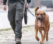 DOG Leashes / Our range of DOG leashes!