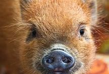 Pigs Are More Than Breakfast / I collect pigs ... especially ones with personality..like me!