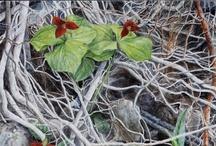 Terra Verte Art & Illustration: Kathleen O'Connell