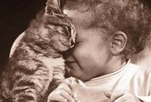 Catlady / In ancient times cats were worshipped as gods; they have not forgotten this. - Terry Pratchett