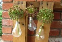 Gardening: Spring Bulbs
