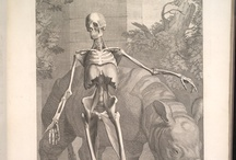 Tables of the Skeleton and Muscles of the Human Body / All images are sourced from the University of Virginia Library digital repository. This item is held in Historical Collections and Services at the Claude Moore Health Sciences Library at the University of Virginia.  You may request high quality images for reproduction from UVa Library's Digital Curation Services at http://tracksys.lib.virginia.edu