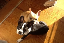 Our Frenchtons / Meet our Frenchtons, Abby and Rapolas / by Revere Guest House
