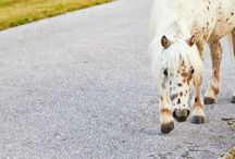 Gorgeous Horses & Ponies / Love horses and ponies? This board features daily pins of these beautiful animals so you can get your horse and pony fix in. Be sure to visit the blog at Horses & Heels too!